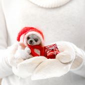 Little teddy bear in female hands in cozy mittens. Woman hands in white mittens holding a cute tiny teddy bear. Winter time and Christmas present concept.