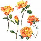 Set of watercolor floral elements.