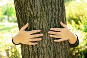 Person hugs trunk large tree, close-up