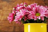 Beautiful chrysanthemum in vase on wooden background