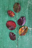 Dark red leaves on green wooden background