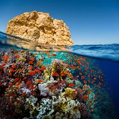 Постер, плакат: Split shot of the bright coral reef in Ras Muhammad National Park Red Sea Egypt