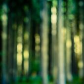 Retro Forest Blur