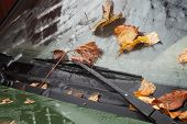 pic of nasty  - Faded leaves on the car windshield driving in a nasty weather concept - JPG
