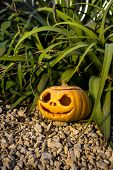 Halloween Scary Pumpkin In The Gren Grass Brushwood