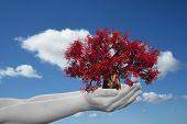 Concept or conceptual human man or woman hand holding a red spring tree and blue sky with clouds ecology background