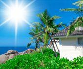 Coconut Getaway Under Palms