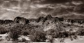 Nice Monochrome Image of the desert in southern New Mexico next to the border.