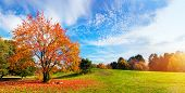 image of tree leaves  - Autumn - JPG