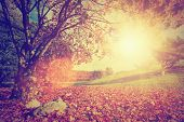 Autumn, fall landscape with a tree. Sun shining through colorful leaves. Vintage retro mood.
