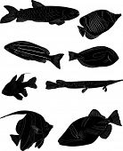 illustration with set of fish sketches isolated on white background