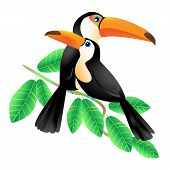 stock photo of toucan  - Two colorful toucans sitting on a branch isolated on white - JPG