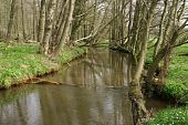 pic of brook trout  - Trout brook Rossel in Saxony - JPG