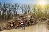 image of lumber  - Young lumber engineer standing with notebook beside cut trunk stock - JPG