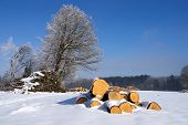 image of afforestation  - Forestry in winter stable of round wood - JPG