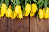 picture of yellow buds  - Big bouquet of beautiful yellow flowers, tulips, lie on the wooden floor of the old brown boards, green stems and leaves, dense buds of yellow tulips, recently cut in the flowerbed.