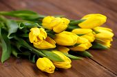 pic of yellow buds  - Big bouquet of beautiful yellow flowers, tulips, lie on the wooden floor of the old brown boards, green stems and leaves, dense buds of yellow tulips, recently cut in the flowerbed.