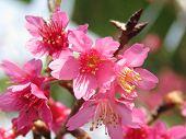 stock photo of plant species  - Petunia is genus of 35 species of flowering plants of South American origin - JPG
