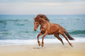 foto of fillies  - Beautiful red horse galloping in a phase jump developing mane on solar background refreshing sea - JPG
