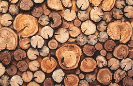 picture of lumber  - Abstract photo of a pile of natural wooden logs background top view - JPG