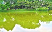 foto of reflection  - The reflections of green trees and blue skies on the smooth water surface of the lake inside a park - JPG