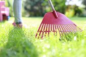 image of plunder  - How to cultivate lawn.