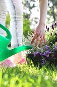 pic of composition  - Floral composition violet color. Planting flower garden.  Floral composition. - JPG