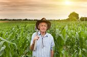 pic of hoe  - Senior farmer carrying hoe on the shoulder and walking in corn field - JPG