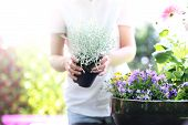 stock photo of plant pot  - Female plants in pot plants forming a beautiful composition flower - JPG