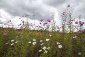 picture of rain clouds  - Dark rain cloud and autumn flowers on ground - JPG
