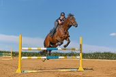 picture of brown horse  - Image of female rider with brown horse jumping a hurdle - JPG