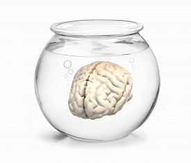 pic of fishbowl  - fishbowl with human brain inside 3d illustration - JPG