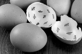 pic of cross-hatch  - Egg shells shown lying on a wooden background with marks inside counting down the days till hatching - JPG