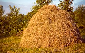 stock photo of dry grass  - Hay pile as an agricultural farm and farming symbol of harvest time with dried grass straw as a mountain of dried grass haystack - JPG