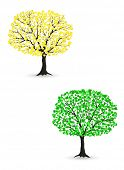 two vector realistic tree isolated on white