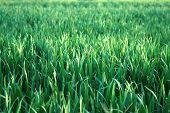 Grassy Backdrop