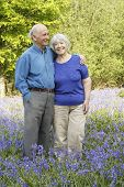 Senior couple in woodland full of beautiful springtime bluebells.