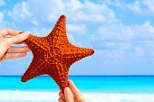 pic of echinoderms  - Hand held starfish in front of a caribbean blue ocean - JPG