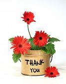 stock photo of thank-you  - Pretty potted daisy - JPG