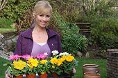Lächelnd Gärtner mit einem Tablett Primeln bereit, gepflanzt werden. Auch erhältlich in vertikalen.