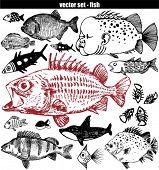 Fisch-Satz - doodle
