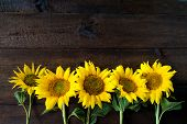 Bright Yellow Sunflowers On Natural Rustic Texture Wooden Board. Mockup Banner With Flowers Of The S poster