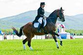 Equestrian sport. Female dressage rider