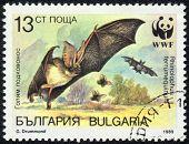 Rhinopophus Ferrumequinum
