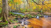 beautiful river in autumn forest