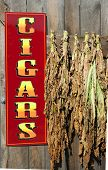 Sign For Cigars Near Hanging Tobacco Leaves