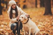 Headphones On Labrador. Young Woman With Dog. Autumn Park. Walking With Pets Outdoor. Pets And Peopl poster