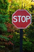 Stop Sign In A Park