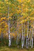 Bright Fall Colors In Utah