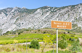 stock photo of mauri  - vineyar of Maury in Languedoc - JPG